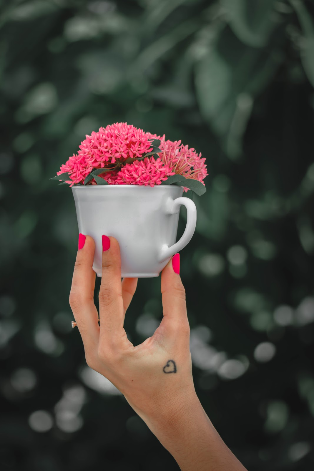 cups of pink flowers