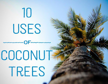 Essay about coconut tree in tamil