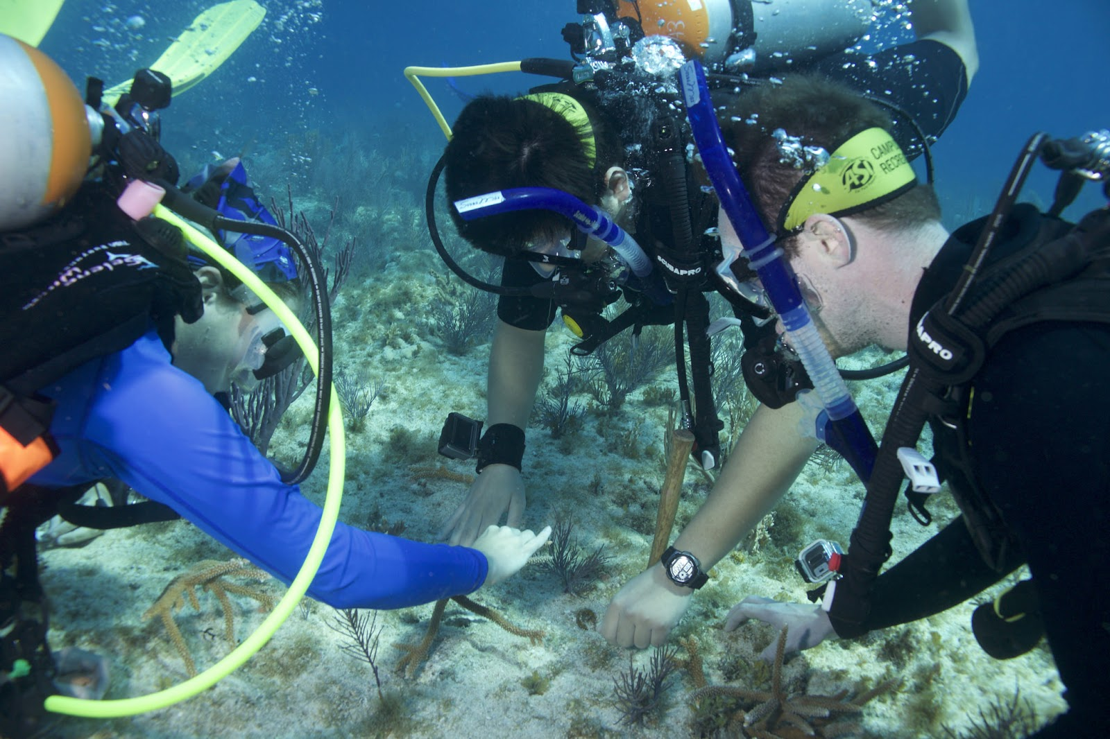 Students scuba diving in Key Largo, FL