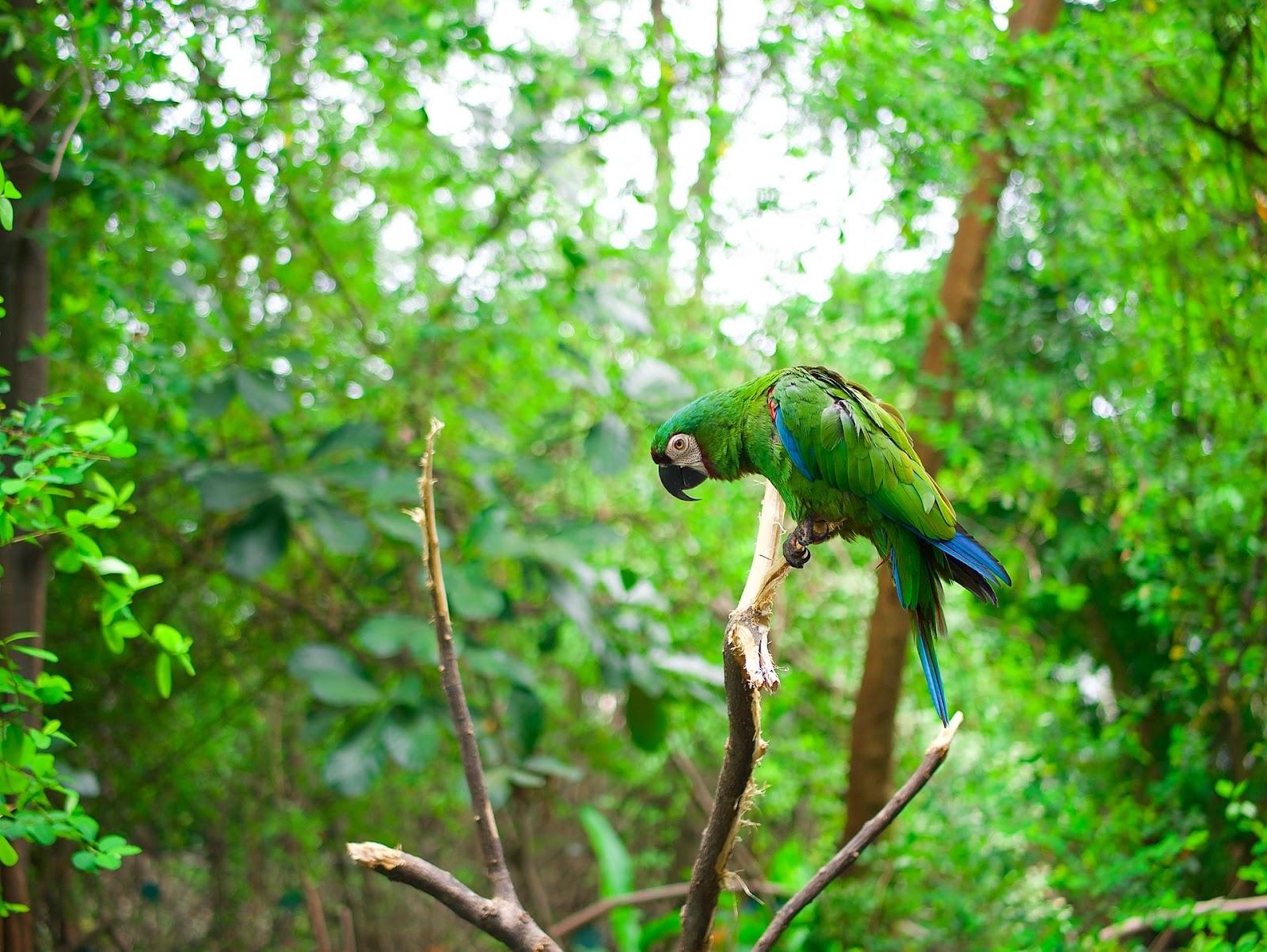 A recuperação de florestas poderia gerar 250 mil empregos (Fonte: Unsplash)