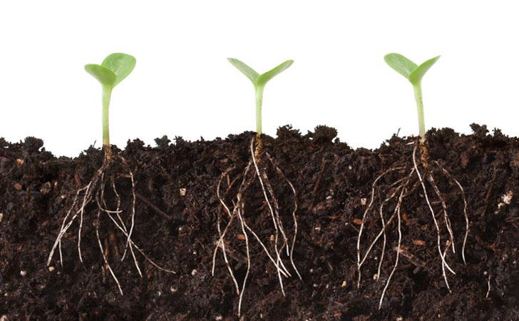 shutterstock-plant-roots.jpg