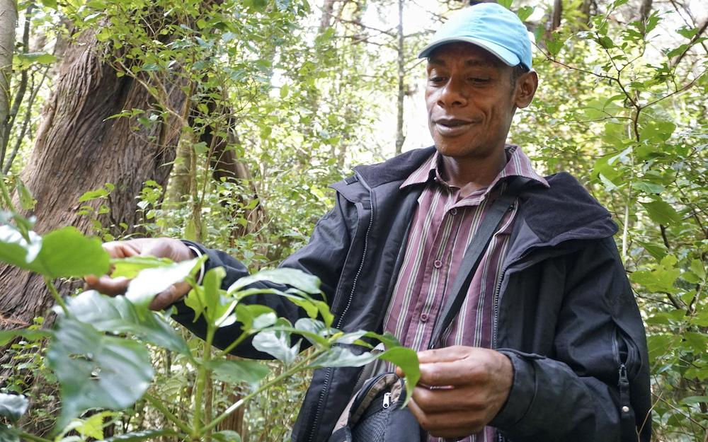 coffee farmer in madagascar