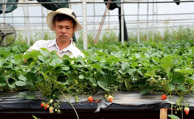 Tìm việc làm vườn ở Đà Lạt