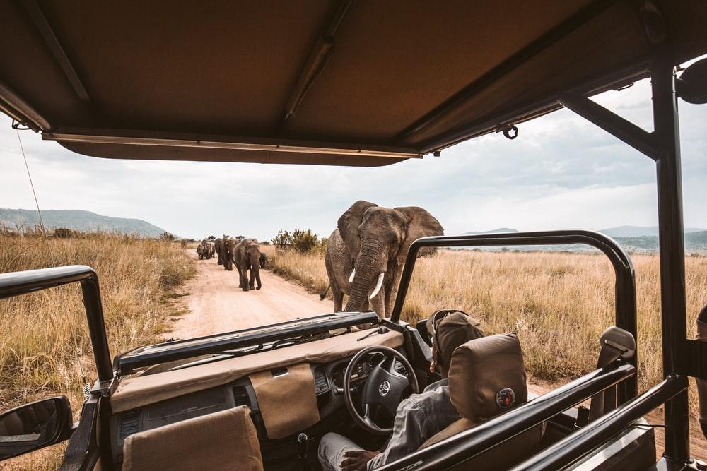 elephants on rad
