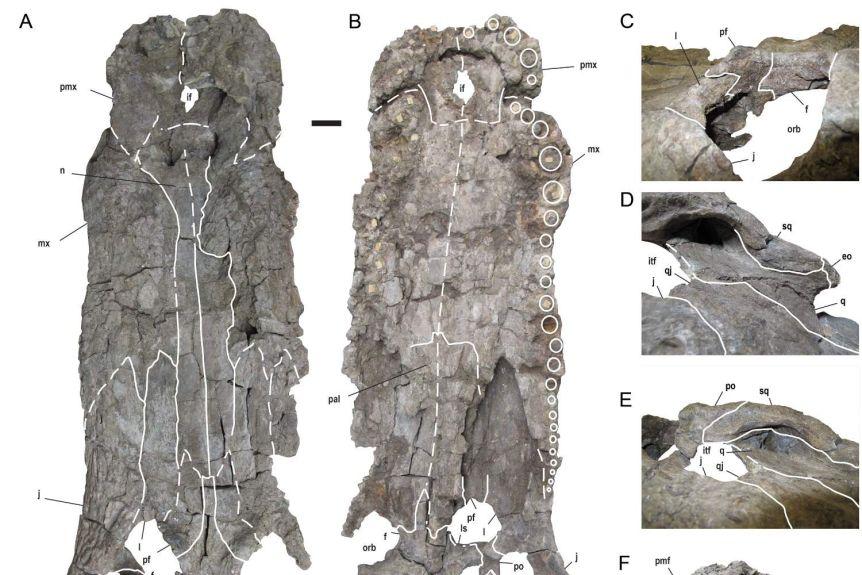 Nueva investigación revela tres especies de monstruosos cocodrilos que cazaban dinosaurios 2