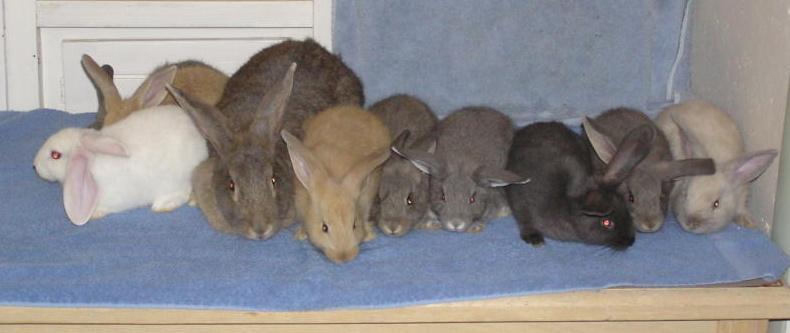 http://www.rabbitgeek.com/pics/brazlitterwid.jpg