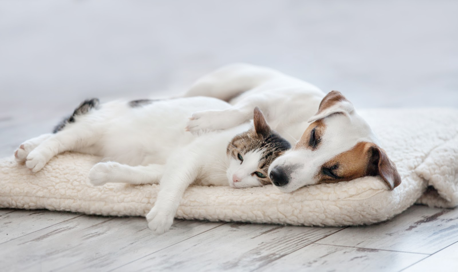 A cat and dog cuddling on bed
