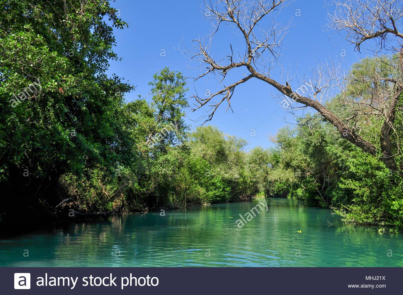 Bildresultat för acheron river swamp