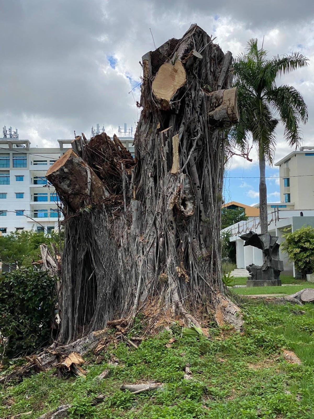 Convocan manifestación en contra de la tala de árboles en la UPR