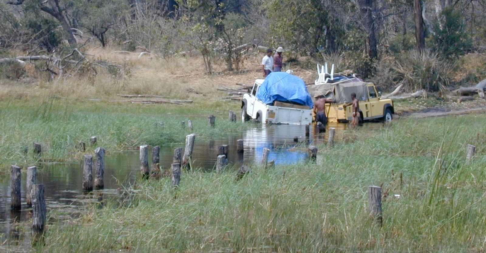 ecology fieldwork in the Okavango delta, Botswana can be tricky