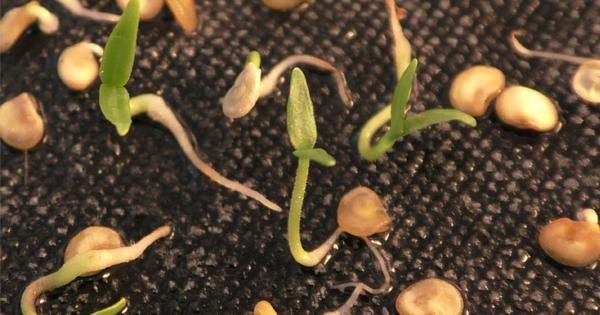nurserylive-grow-from-seed-1