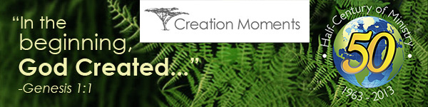 Creation Moments 600x150.jpg