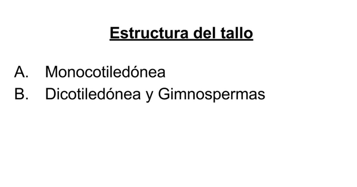 4 Estructura Primaria Y Secundaria Del Tallo