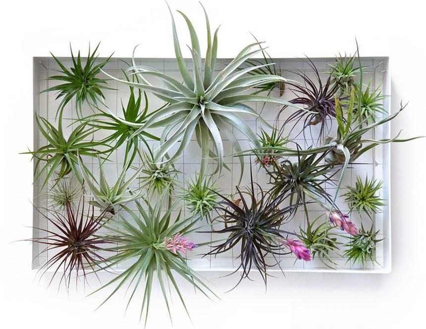 plantas de ar