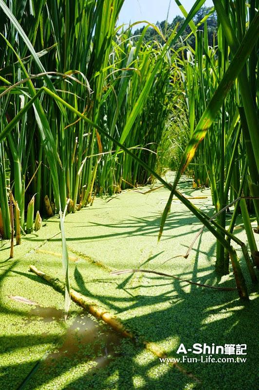 桃米休閒農業區18