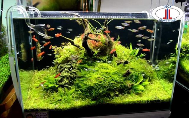 bể cá inox đẹp