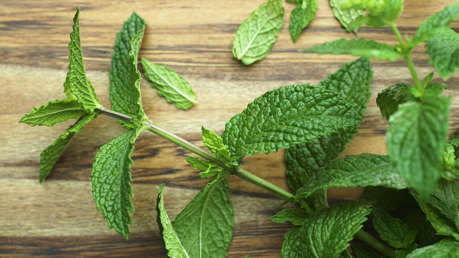 Mint's menthol may assist stomach problem