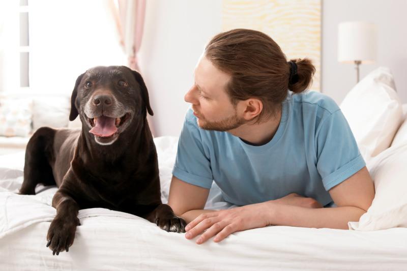 Toleranz des Partners - Darf der Hund mit ins Bett?