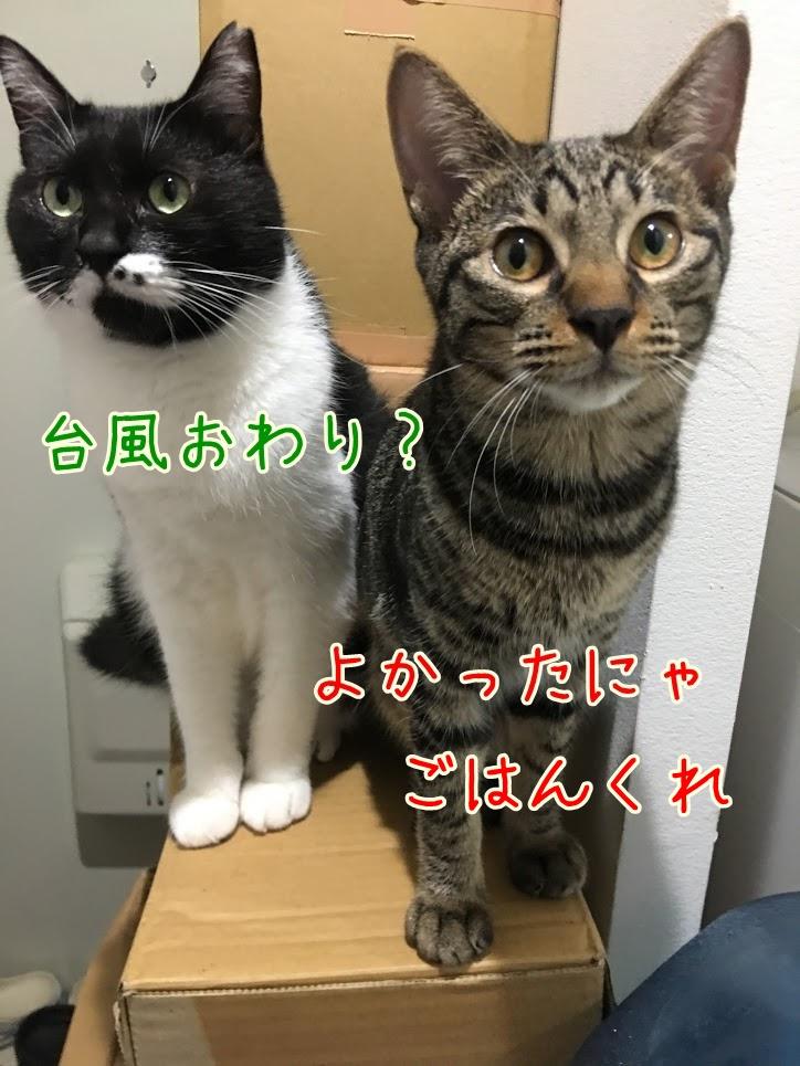 低気圧の影響?台風と猫の体調変化について