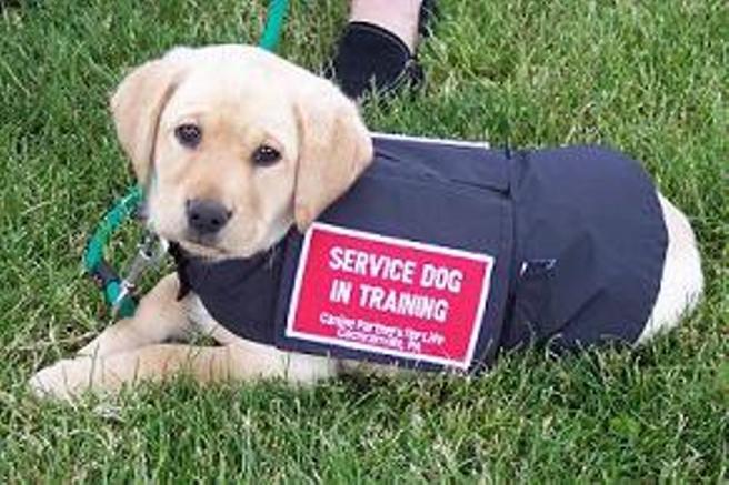 service dog in training animals