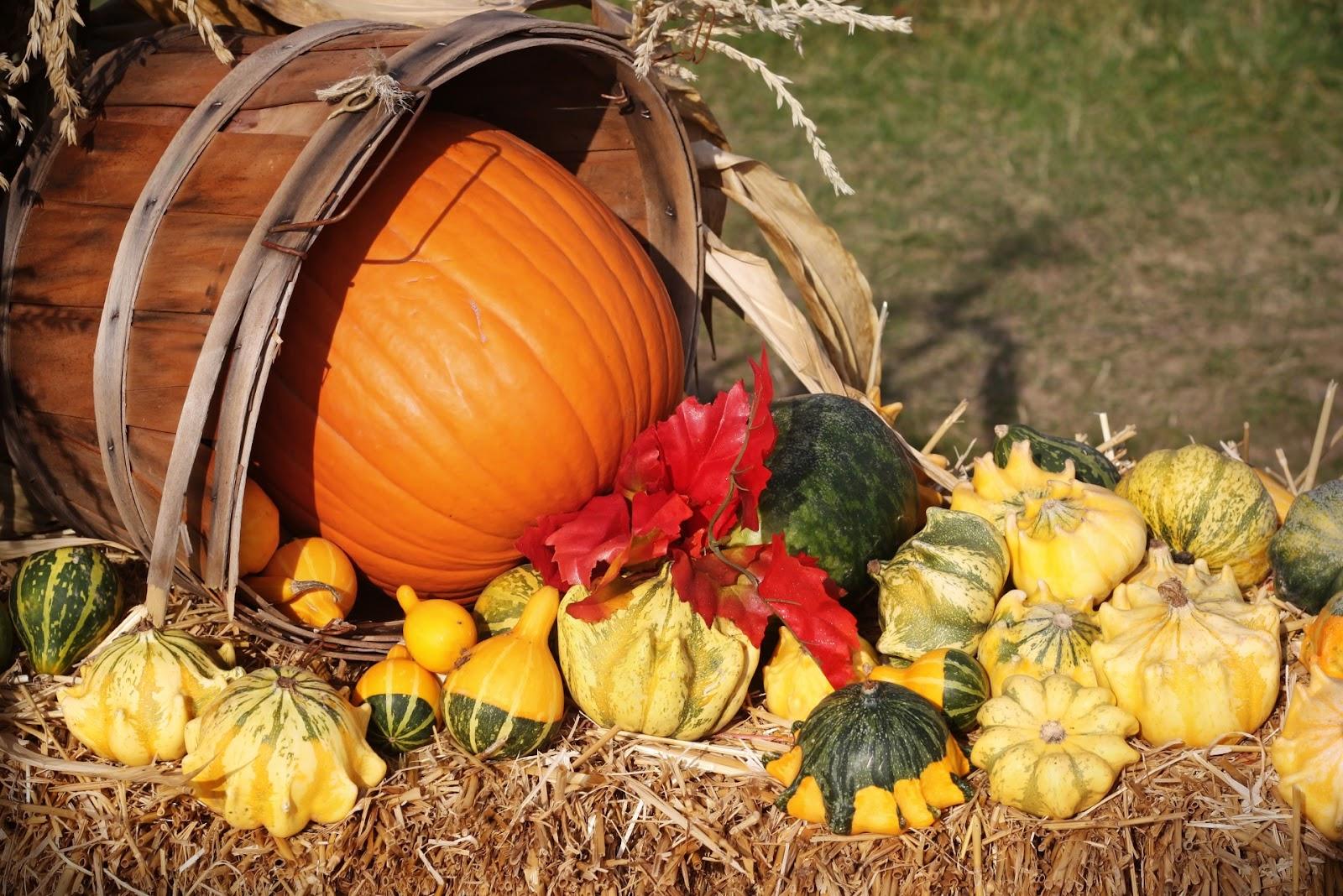 ... Fall Harvest