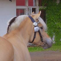 Ny blogg om våra hästar/ Meidän hevosista kertova uusi blogi