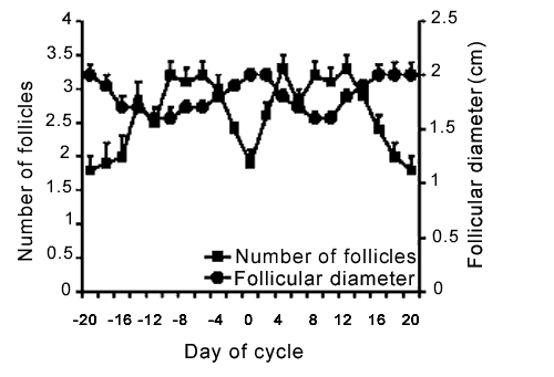 Inverse relationship between the number of follicles and follicle diameter (cm) in unmated camels. (Day 0 is taken as the day on which the largest follicle reaches its maximum diameter).