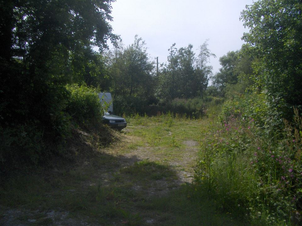 A picture containing tree, outdoor, grass, forest  Description automatically generated