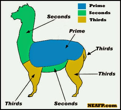 Alpaca Shearing Guide.jpg