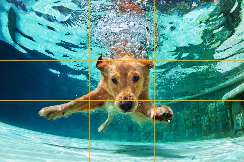 Using The Golden Ratio For Dog Photography - 123RF Blog