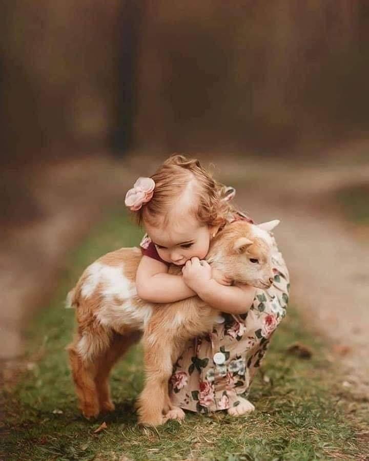 کودک و گوساله