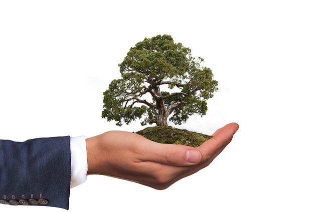 Ficus Commercial Landscapes Melbourne