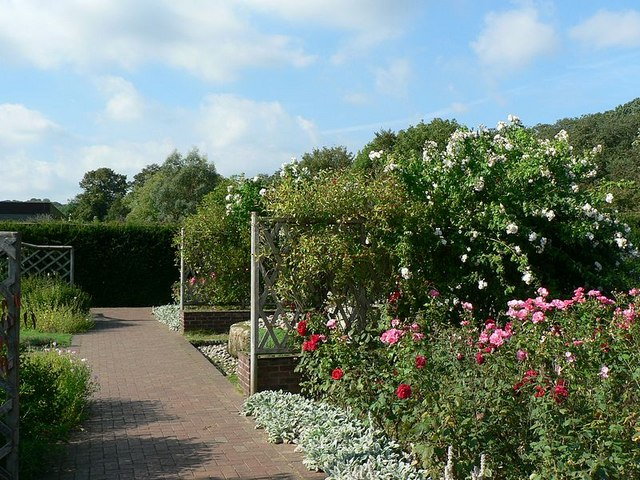 Flowering shrubs in a border