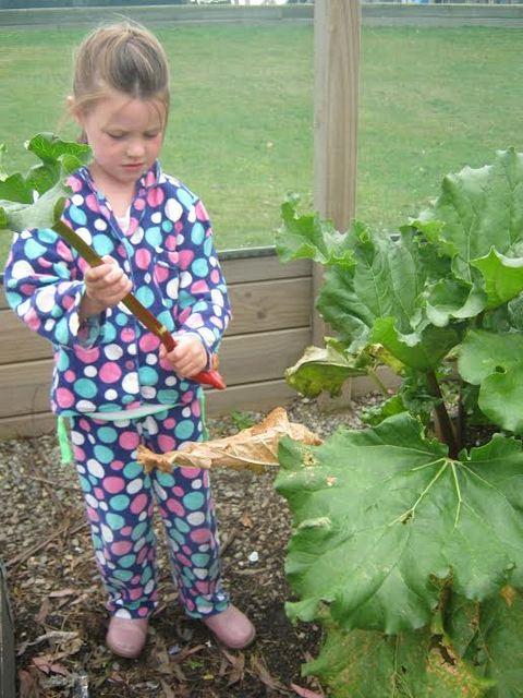 Rhubarb Crumble 1.jpg
