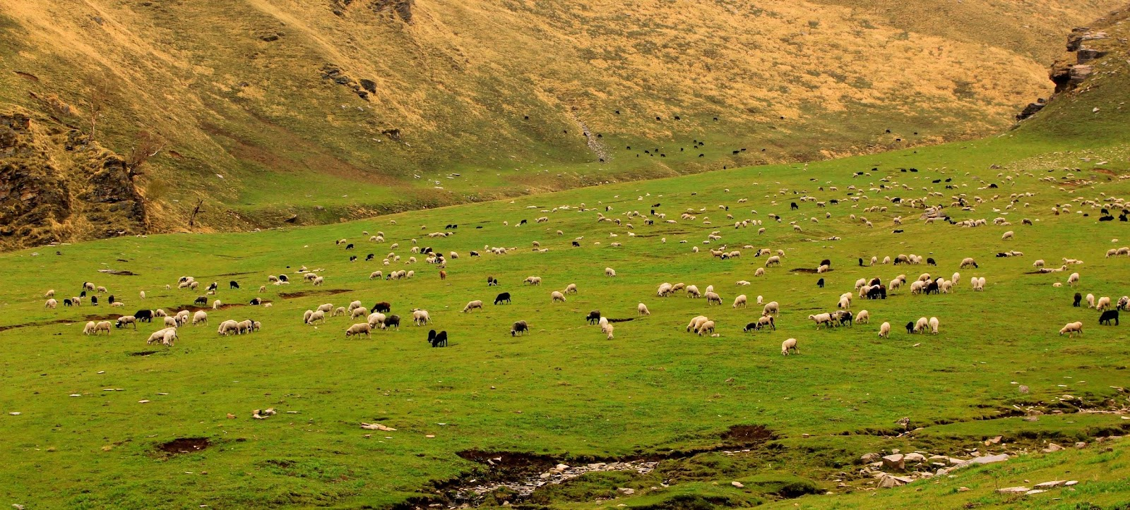 The_Grassland_of_Pabbar_Valley(Dyara_Thach).jpg