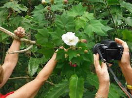 Voici mes quelques hibiscus en fleurs - Page 2 N2tcm6s2uFCpH4PyAlslgzJWKsCschXeAVOmiPw3vpg=w271-h203-p-no