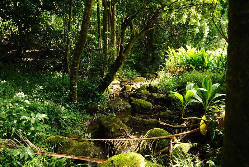File:Trail to Aihualama Falls (5170653471).jpg