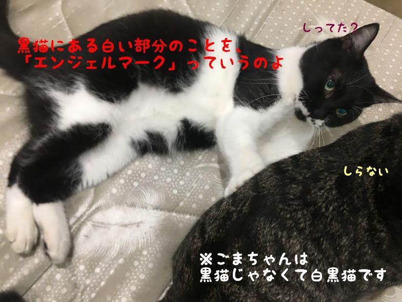【黒猫】チャルメラで広瀬すず主演「すずネコリカちゃん」に応募して当たる?