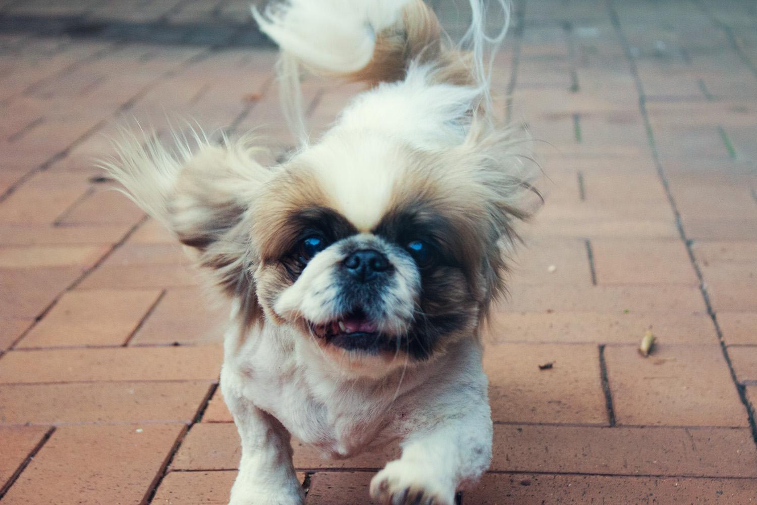 5 Ways That Your Dog Makes Your Life Happy