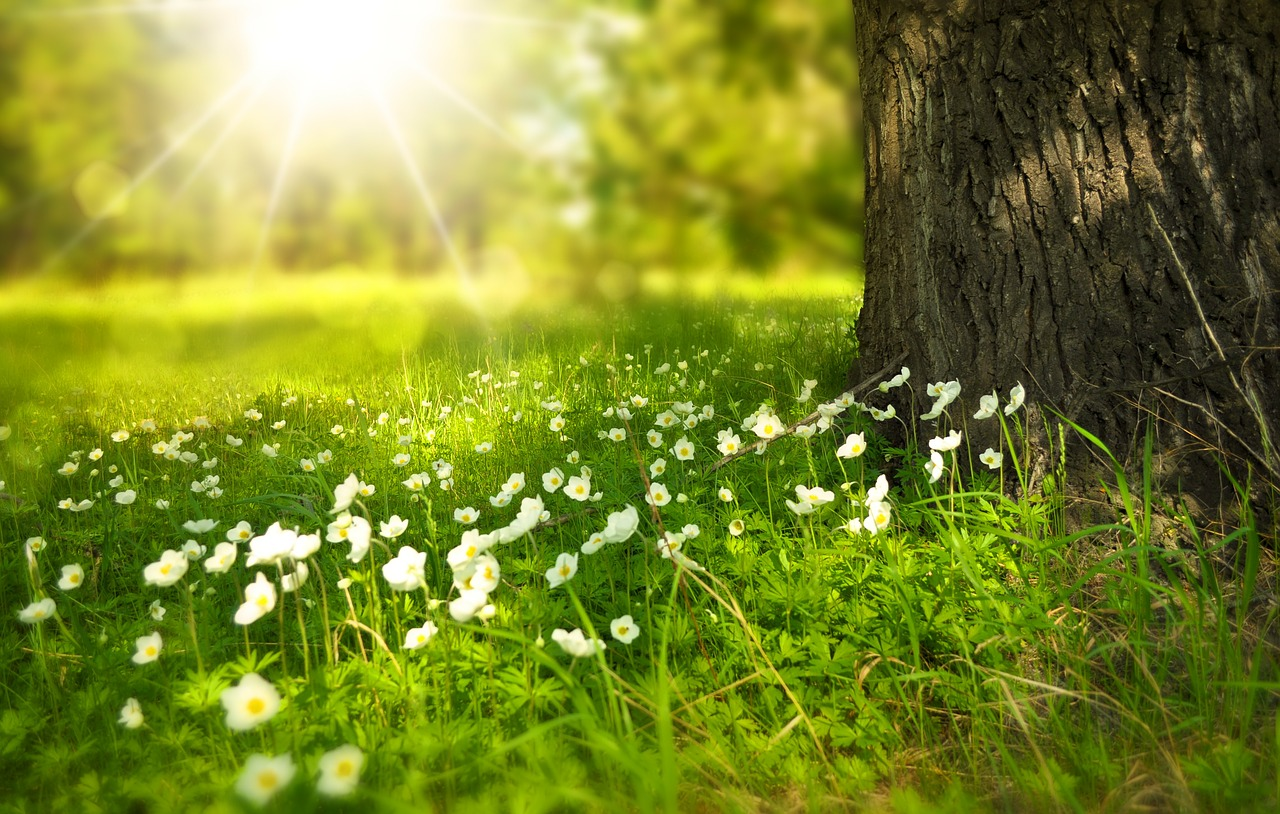 sunlight on grass and flowers