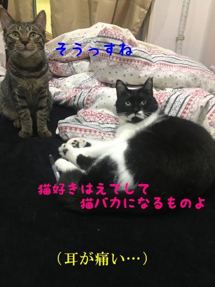 猫の名前の由来は寝子の他にもある!由来と語源について