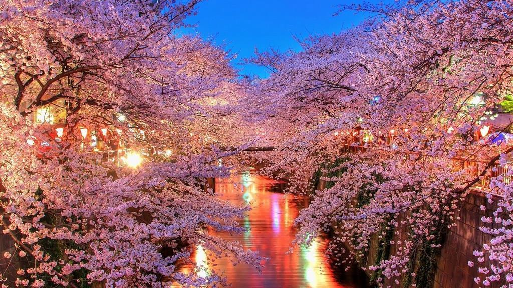 Nên du lịch Hàn Quốc vào mùa nào là đẹp nhất
