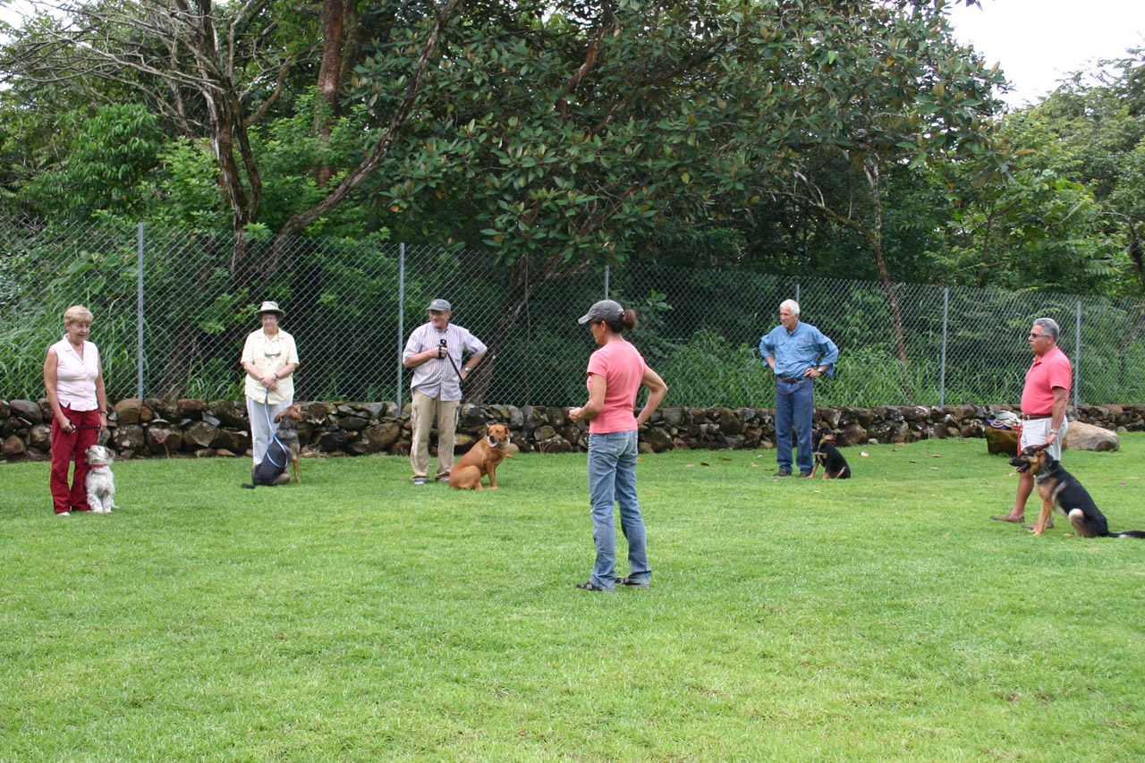 Work with a certified animal behaviorist to control resource guarding in dogs