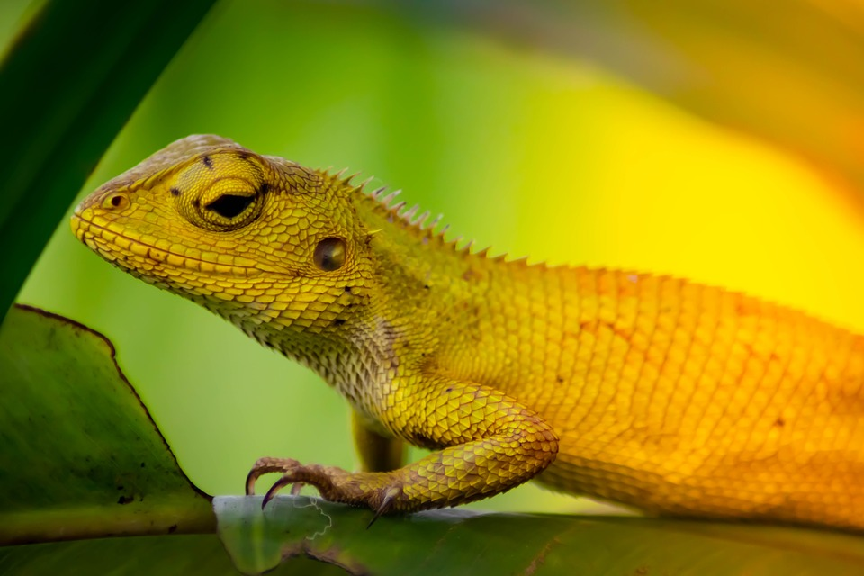 Take inspiration from the chameleon by always adapting to your environment when applying beyond budgeting principles.