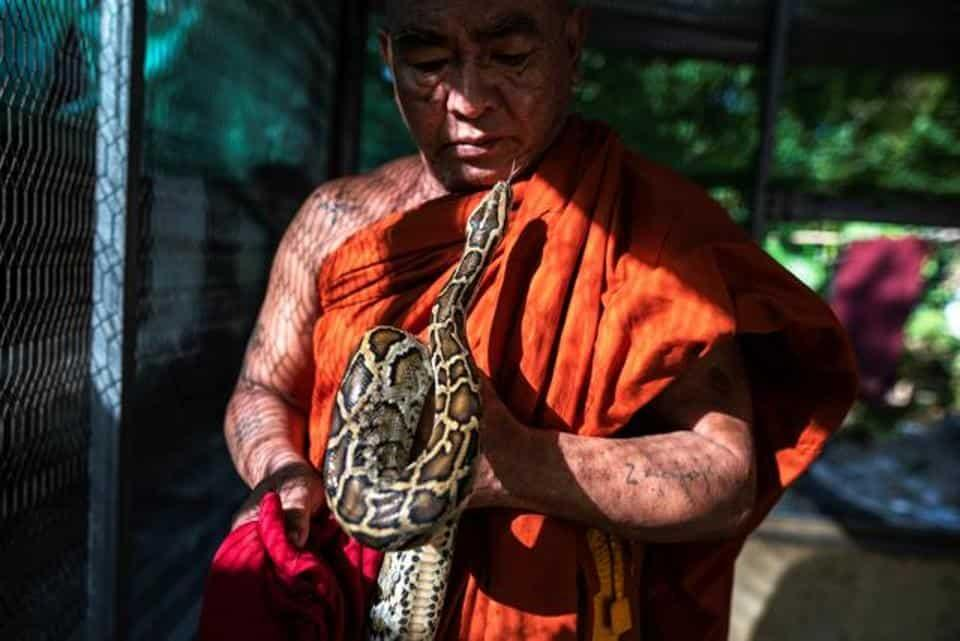 Buddhist monk Wilatha holds a rescued Burmese python at his monastery that has turned into a snake sanctuary on the outskirts of Yangon, Myanmar.