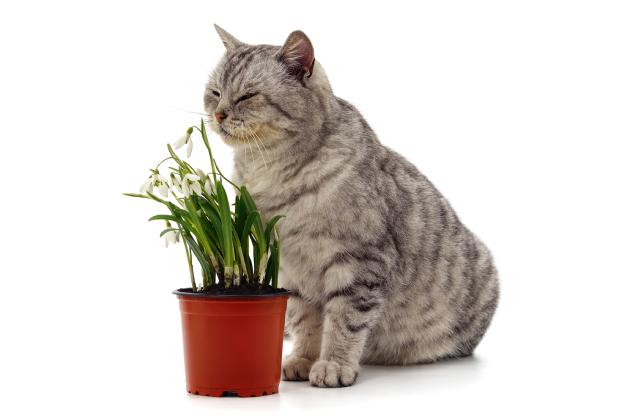 mèo sợ mùi gì là thắc mắc của nhiều sen