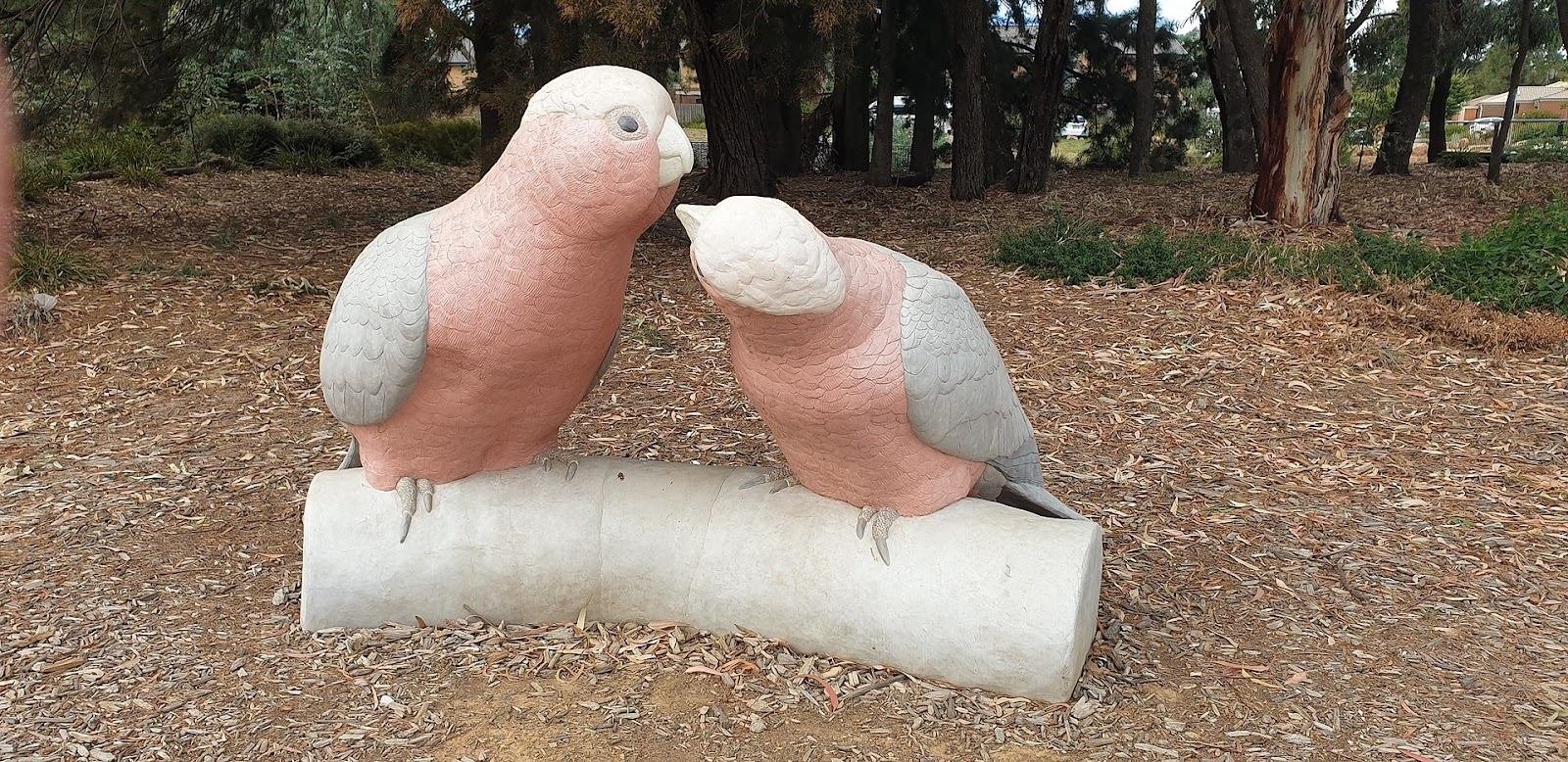 The story of Big Galahs in Watson will warm your heart. Read on to find out more.