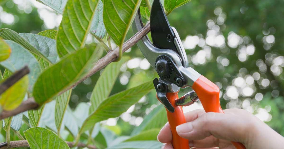 Tree services in benton, AR
