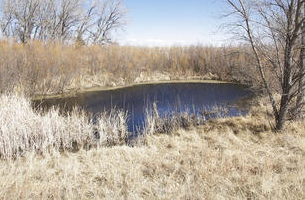 A picture of Middle Spring in near Elkhart in Morton County Kansas.