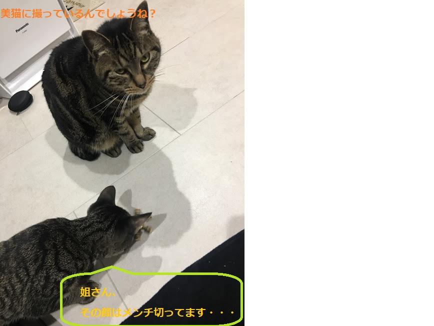 猫の写真の上手な撮り方とは!可愛く撮れる3つの方法